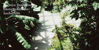 herbarium2018.jpg
